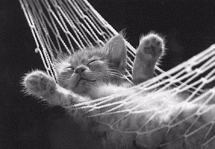 Красивые и профессиональные фото котов 120933032