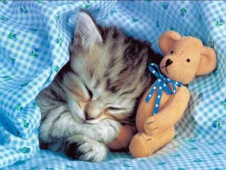 Красивые и профессиональные фото котов 54814177